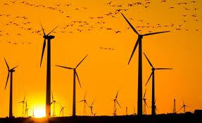 turbines and birds